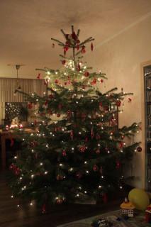 2016_Weihnachtsbaeume__13
